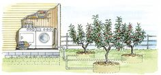 With a simple greywater system, you can use wastewater from your home to irrigate plants in your yard.