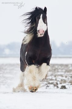 horse,  #For #the #Love #of #Horses #pictures #images