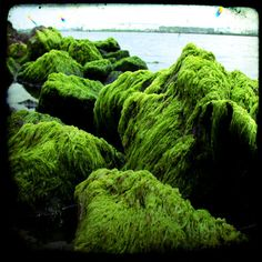 Green Algae Photography by troubled