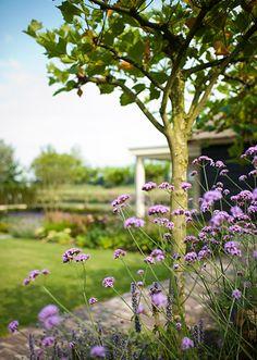 www.buytengewoon.nl landelijke-tuinen landelijke-tuin-met-klassieke-buitenruimte-in-elspeet.html Purple Garden, Landscape Architecture, Park, Gallery, Gardens, Plant, Lawn And Garden, Roof Rack, Parks