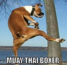 Muay Thai Boxer ....ok this one just made me laugh.