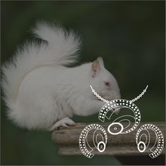 Squirrel shaped #jewelrydesign. Isn't that's kinda quirky?!