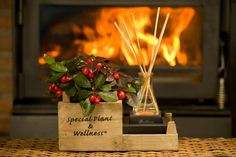 Plants make scents! The world famous scent of gaultheria makes your home smell nice. House Smells, Gift Wrapping, Pearl, Wellness, Make It Yourself, Nice, How To Make, Gifts, Gift Wrapping Paper