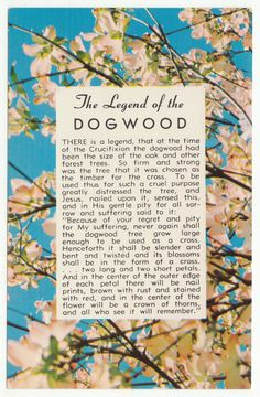 Postcards - Quotes & Humour # 441 - The Legend of the Dogwood