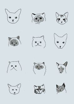 the different faces of cats / drawings / sketches / kitty breeds / illustration Baby Cats, Cats And Kittens, Ragdoll Cats, Sphynx Cat, Graffiti Artwork, Photo Chat, Cat Wallpaper, Wallpaper Quotes, Wallpaper Backgrounds