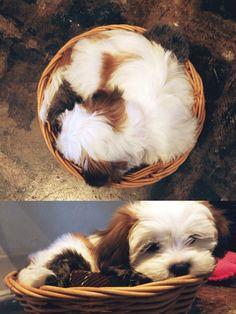 World's Cutest