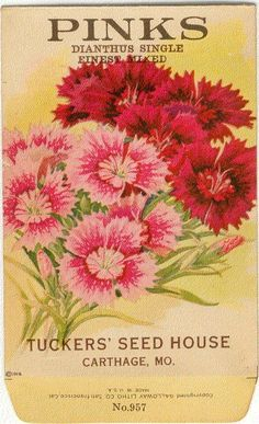 Vintage Flower Seed Packet Tuckers Seed House Lithograph PINKS (Carthage, Missouri).