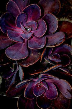 Cartela de cores - beringela