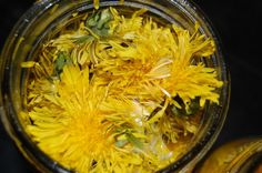 Herbal Revolution: Making and Using Dandelion Oil Dandelion Oil, Dandelion Flower, Dandelion Recipes, Taraxacum Officinale, Flower Oil, Survival Food, Beauty Recipe, Open Arms, Cravings