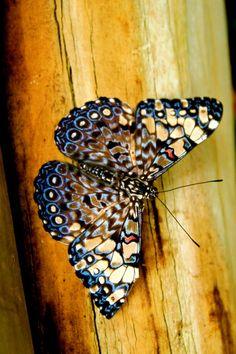 Mosaique+by+trust-my-luck.deviantart.com+on+@deviantART