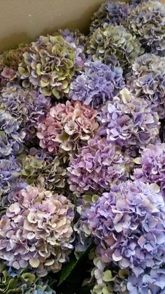 Indigo: Blueberry, Blackberry, Hydrangea