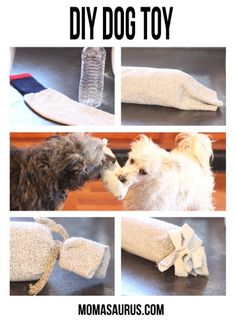 Water Bottle & Sock Dog Toy Homemade Quick & Easy DIY Dog Toy using just a water bottle, sock & string & the pooches will love it. Homemade Dog Toys, Diy Dog Toys, Pet Toys, Diy Pour Chien, Dog Enrichment, Ideias Diy, Dog Crafts, Animal Projects, Diy Projects