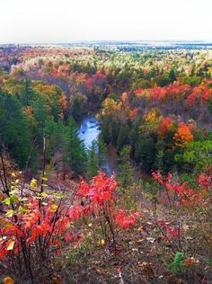 Gorgeous pic of the Manistee River