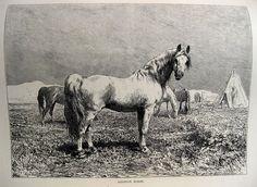 Egypt, Arch, Horses, History, Animals, Ebay, Longbow, Historia, Animales