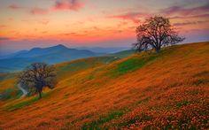 закат, холмы, цветы