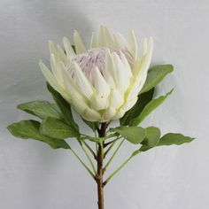 Superior quality artificial King Protea Flower.  Large & very realistic flocked flower head with an imitation woody stem & life-li