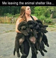 Insanely Hilarious Dog Memes crush - Funny Dog Quotes - Insanely Hilarious Dog Memes crush The post Insanely Hilarious Dog Memes crush appeared first on Gag Dad. Cute Funny Animals, Funny Animal Pictures, Funny Cute, The Funny, Funny Dogs, Hilarious, Dog Pictures, Dog Memes, Funny Memes