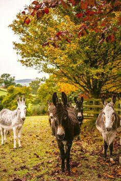 Burritos, Cute Donkey, Cut Flower Garden, Mini Farm, Goat Farming, Farm Yard, Wild Horses, Zebras, Exotic Pets