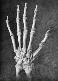 Dorsal Hand Skeleton by elizabethnixon on DeviantArt Skeleton Hands Drawing, Skeleton Hand Tattoo, Skull Hand, Human Skeleton, Skeleton Art, Tattoo Hand, Hand Anatomy, Skeleton Anatomy, Anatomy Drawing