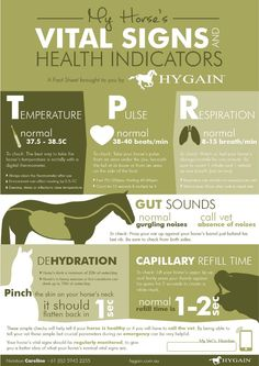 **FREE Horse Health Fact Sheet** How often do you check your horse's vital signs? Regular monitoring of your horse's main health indicators is so critical and can give you extra information in case of an emergency!! This fact sheet is a must have for all horse owners to check and keep up to date with your beloved horses' vital signs and health indicators! Download your free fact sheet by clicking on the image.