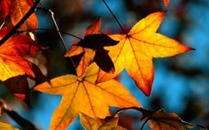 WALLPAPERS HD: Colors of Fall
