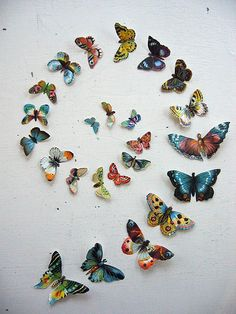 Butterfly Circle