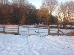 Winter walk- Budby