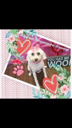 Pretty Girl Dog Grooming At Friend And Companion And Dog