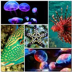 Sea creatures collage 1