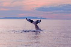 My mom has always wanted to go to Alaska, among all the things she wants to see and do there....whale watching!