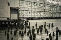 Chelsea Stakes Peeing Pier by *piratesofbrooklyn on deviantART