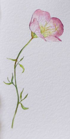 Evening Primrose.  This would make a beautiful tattoo