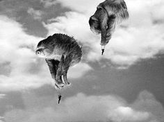 """Faulschirmspringer"" Fotomontage by Liz Napino"