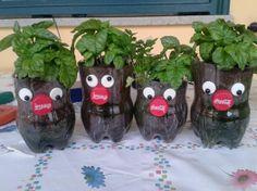 Piantine di basilico in vasetti riciclati