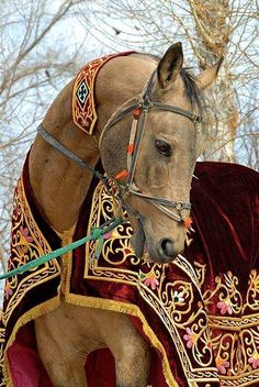 Draped horse in Hungary