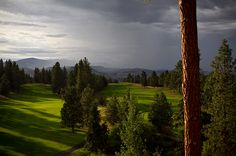 Gallager's, One of the many golf courses in Kelowna. -- Curated by: Ultimate Social Club Things To Do In Kelowna, Small Weddings, Social Club, Stuff To Do, Golf Courses, Canada, Travel, Beautiful, Viajes