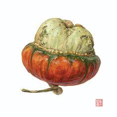Asuka Hishiki Turban Squash Cucurbita maxima watercolor on paper 10 x 10 inches