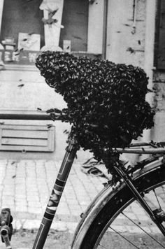 Meret Oppenheim  Bicycle Seat Covered In Bees  1952