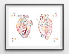 The Heart watercolor print the human heart poster medical art anatomy art heart illustration anatomical heart print surgery science art gift Heart Illustration, Medical Illustration, Heart Poster, Human Figure Drawing, Anatomy Art, Heart Anatomy Drawing, Medical Art, Anatomical Heart, Science Art