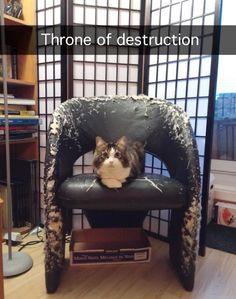 the-best-funny-pictures-of-throne-of-destruction-cat.jpg (550×697)