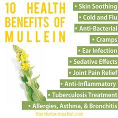Benefits of mullein tea