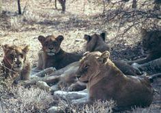Südafrika: LIVE Safari aus einem privaten Wildreservat am Krüger National Park http://safari.reisefreak.de
