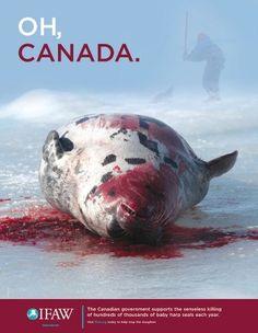 Stop Canadian Seal Hunts