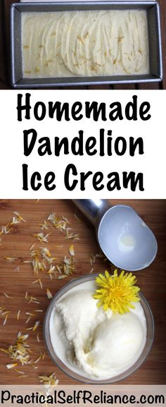 Dandelion & Honey Ice Cream — Practical Self Reliance