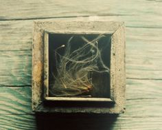 Still life photograph botanical print rustic by dullbluelight, $30.00