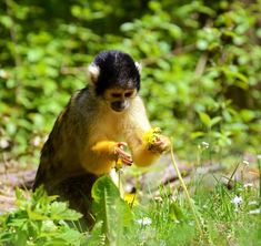 Monkey - picture