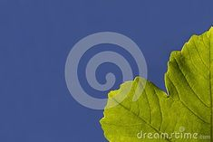 Green leave with blue sky background. For add text . Close up. Ecology, Plant Leaves, Outdoors, Concept, Sky, Seasons, Fresh, Wallpaper, Plants