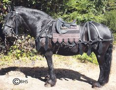 Medieval Leather Barding Breast Collar and Rump Set with Saddle Pad and a Hungarian Bridle.
