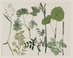 """Dirk van Gelder Wild Plants (1925) pen, ink, watercolour (study for a litho of the same name). fletchingarrows: """"  delicate first growths FOLLOW FOR VEGETAL, VINTAGE, GRUNGIE """""""
