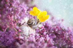 Where the lilacs grow by pocztamadzi
